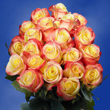 Red Tipped Yellow Roses